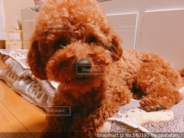 犬の写真・画像素材[580195]