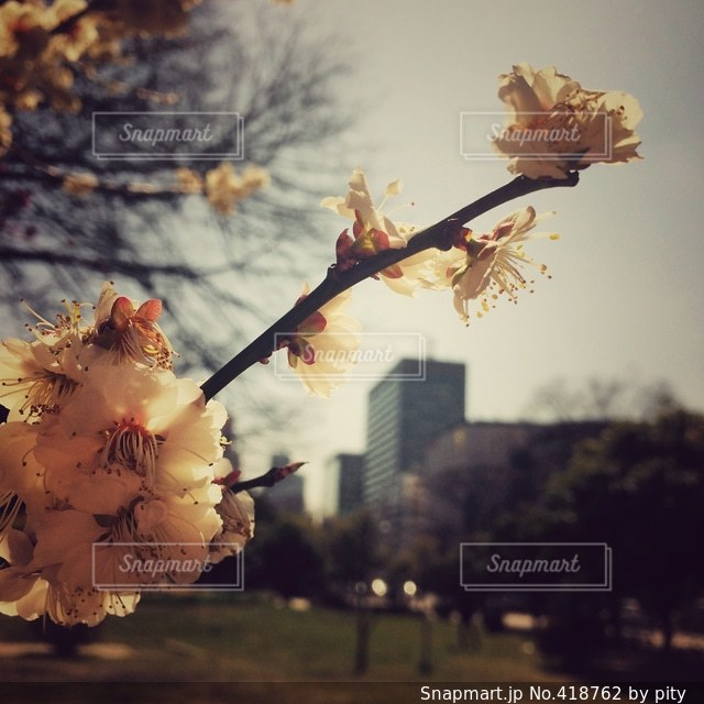 自然の写真・画像素材[418762]
