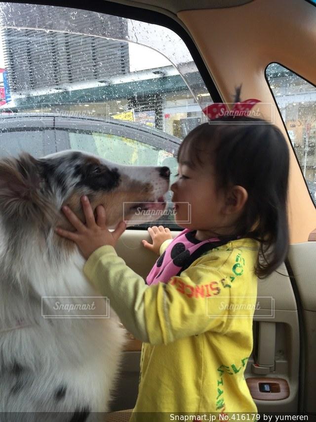 犬の写真・画像素材[416179]