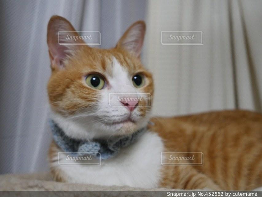 猫の写真・画像素材[452662]