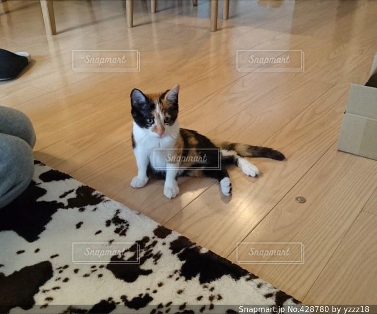 猫の写真・画像素材[428780]