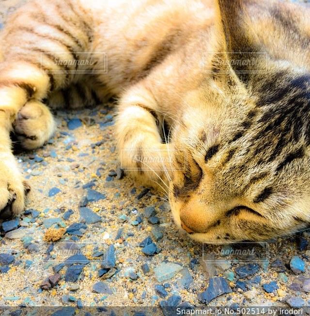 猫の写真・画像素材[502514]