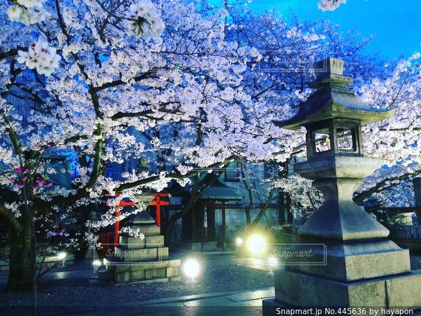 春の写真・画像素材[445636]