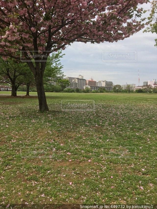 No.449732 公園