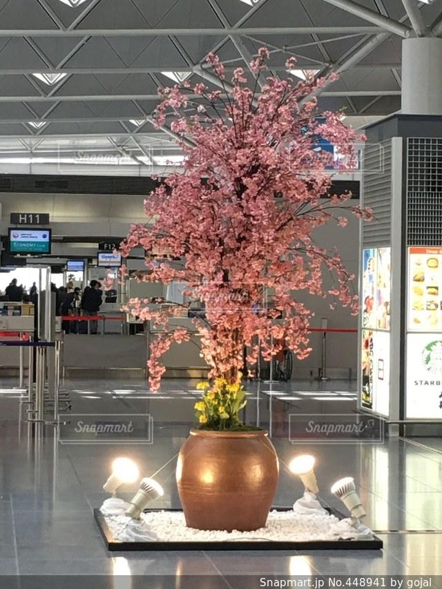 No.448941 桜