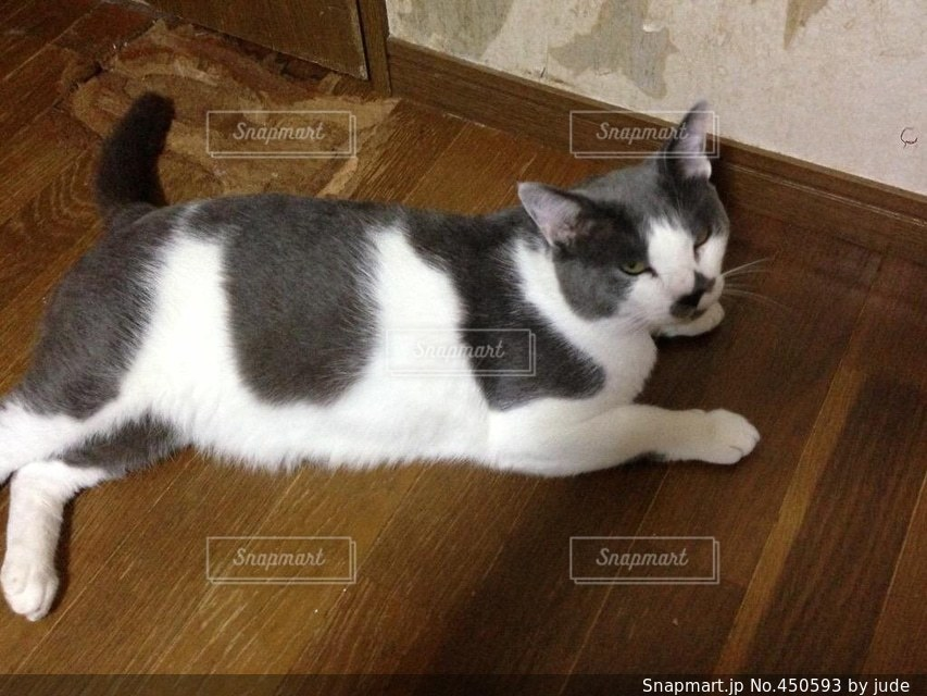No.450593 猫