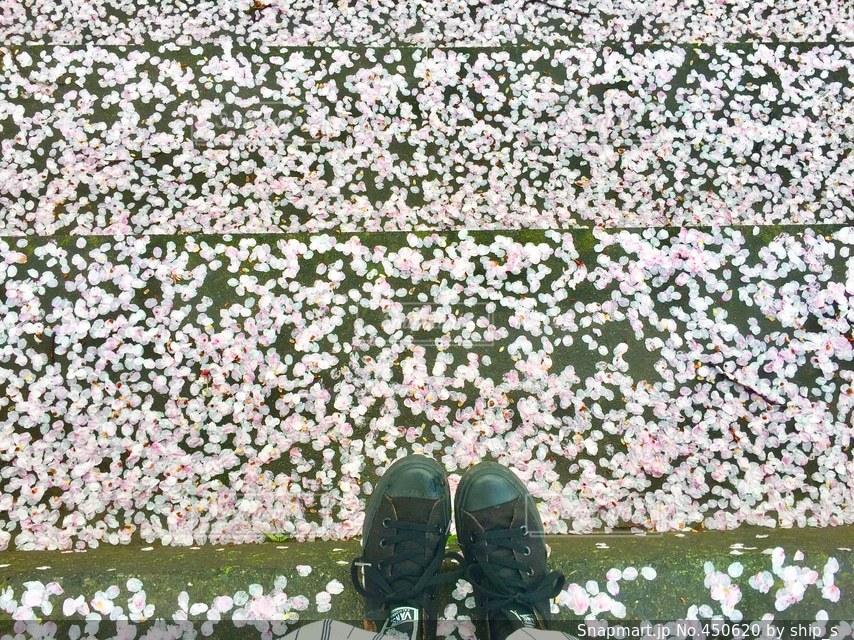 No.450620 桜