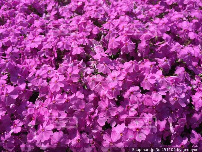 お花畑の写真・画像素材[451104]