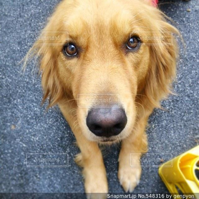 愛犬の写真・画像素材[548316]