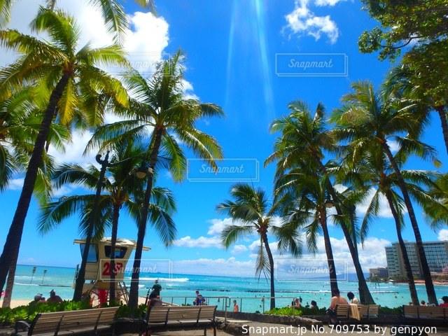 ヤシの木とビーチの写真・画像素材[709753]