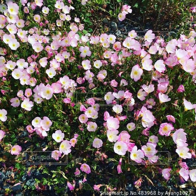 花の写真・画像素材[483968]