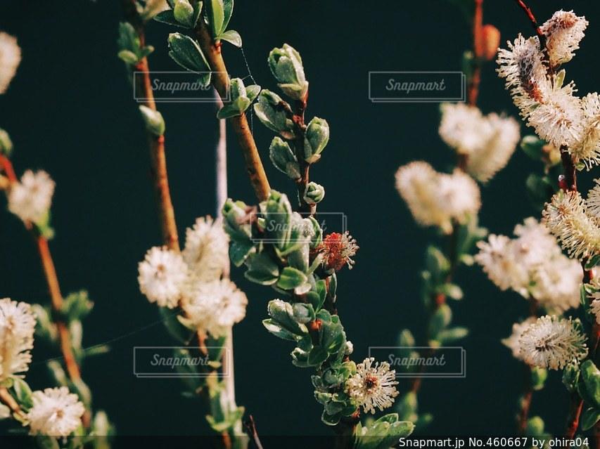 自然の写真・画像素材[460667]