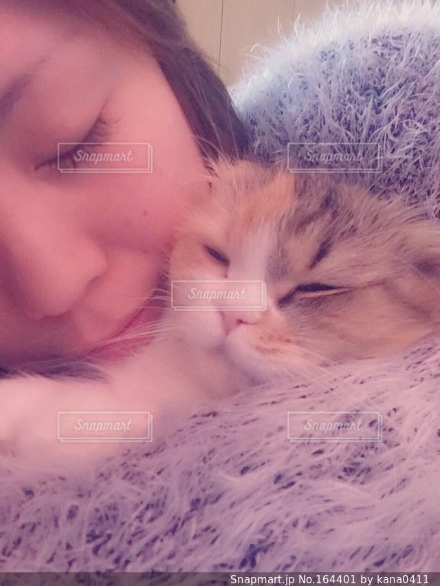 猫の写真・画像素材[164401]