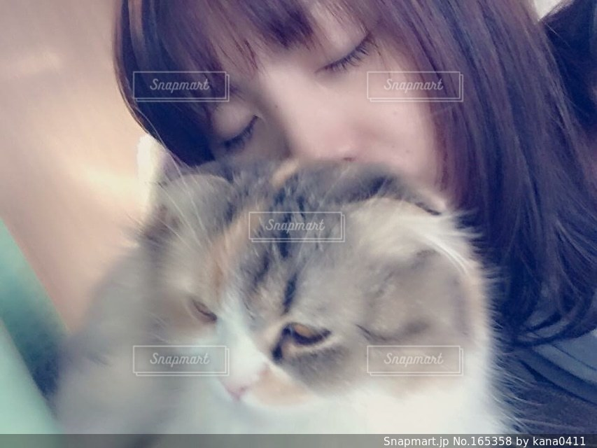 猫の写真・画像素材[165358]