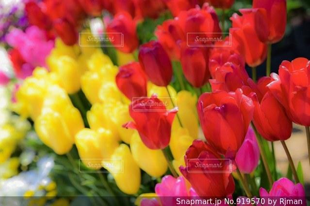 近くの花のアップの写真・画像素材[919570]