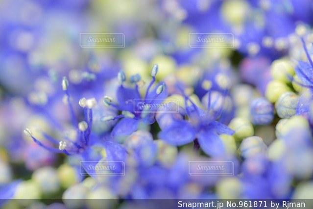 近くの花のアップの写真・画像素材[961871]