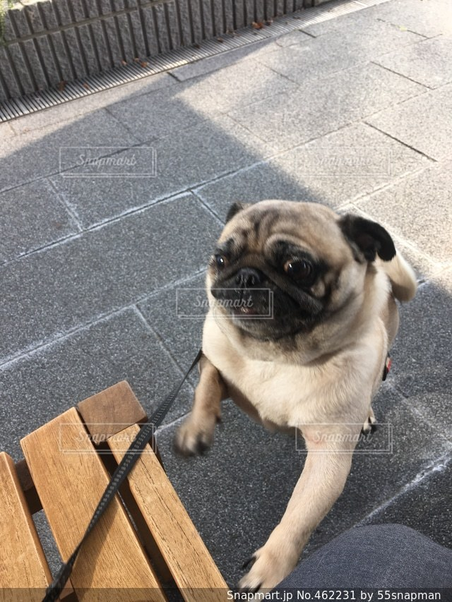 犬の写真・画像素材[462231]