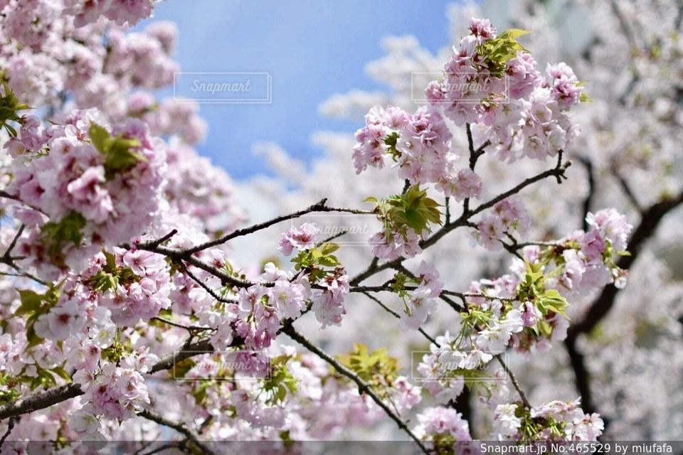 春の写真・画像素材[465529]