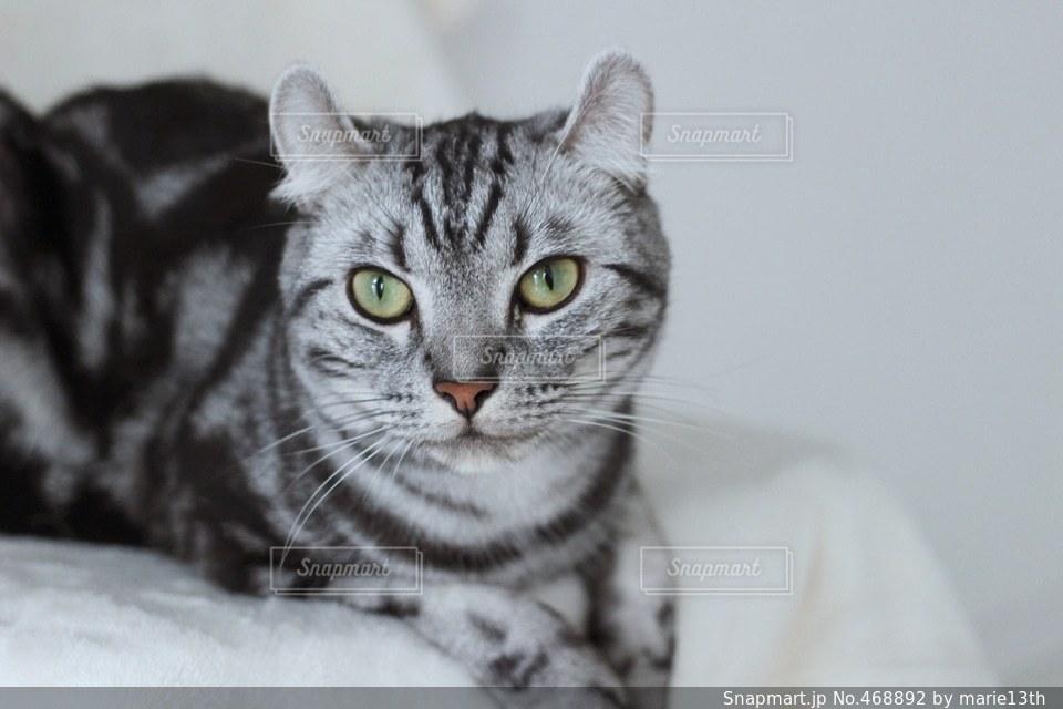 猫 - No.468892