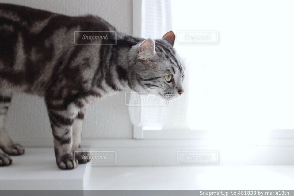 猫 - No.481838