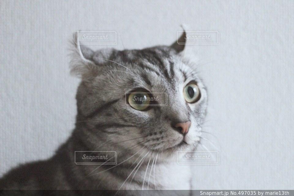 猫の写真・画像素材[497035]