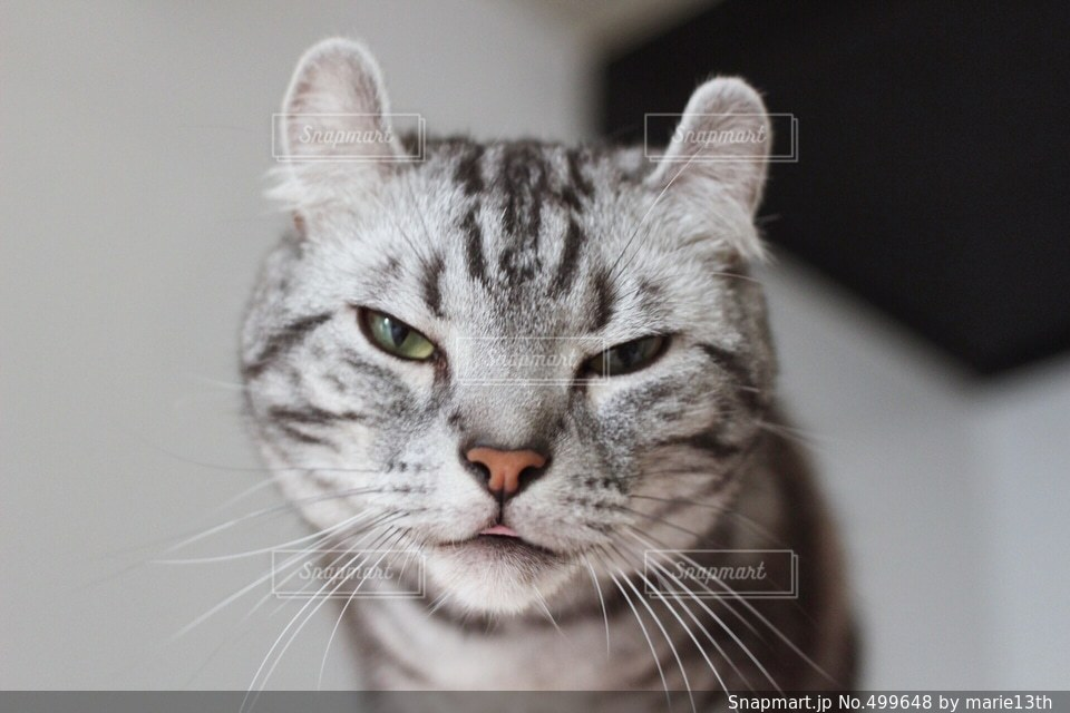 猫 - No.499648