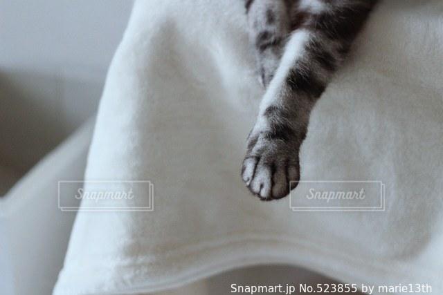 猫 - No.523855