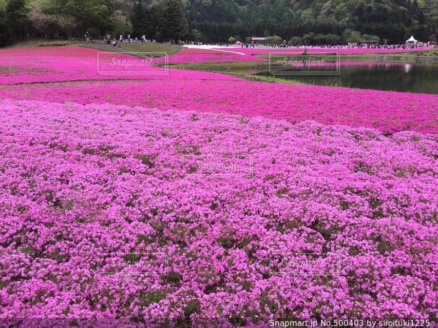 花の写真・画像素材[500403]