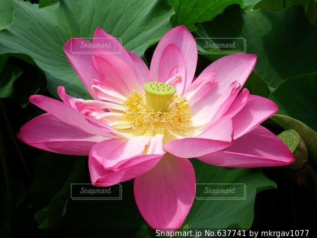 花の写真・画像素材[637741]