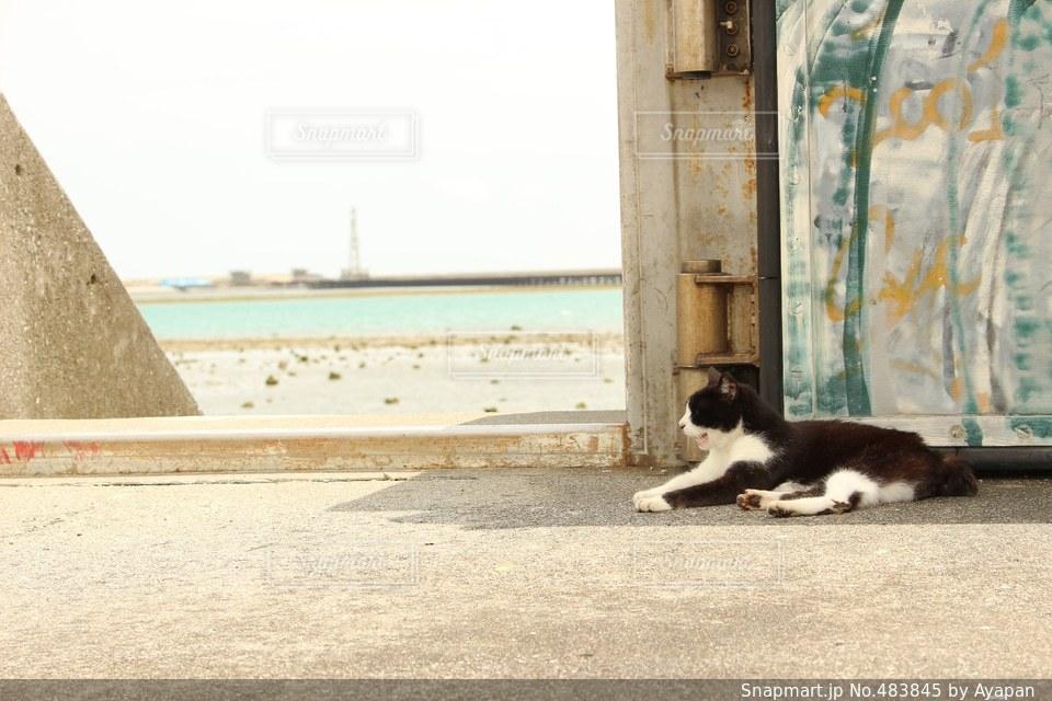 猫の写真・画像素材[483845]