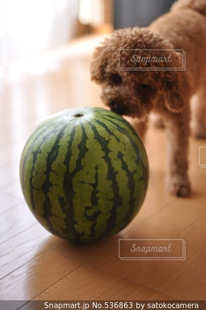犬の写真・画像素材[536863]