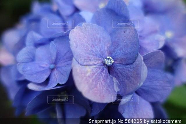 花の写真・画像素材[584205]