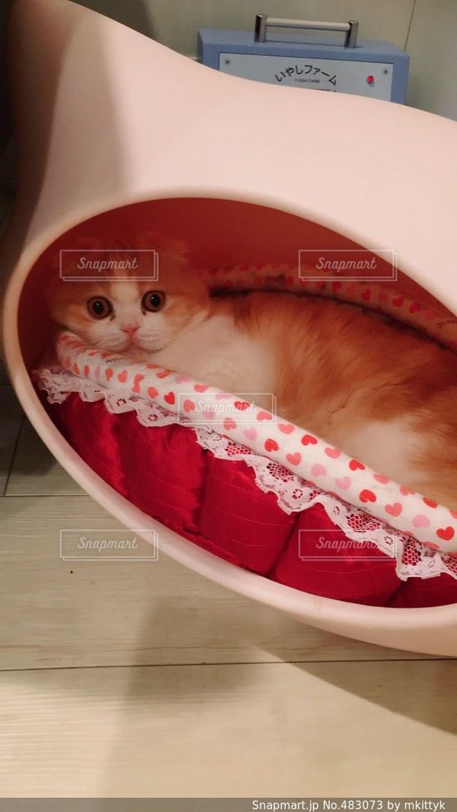 猫の写真・画像素材[483073]