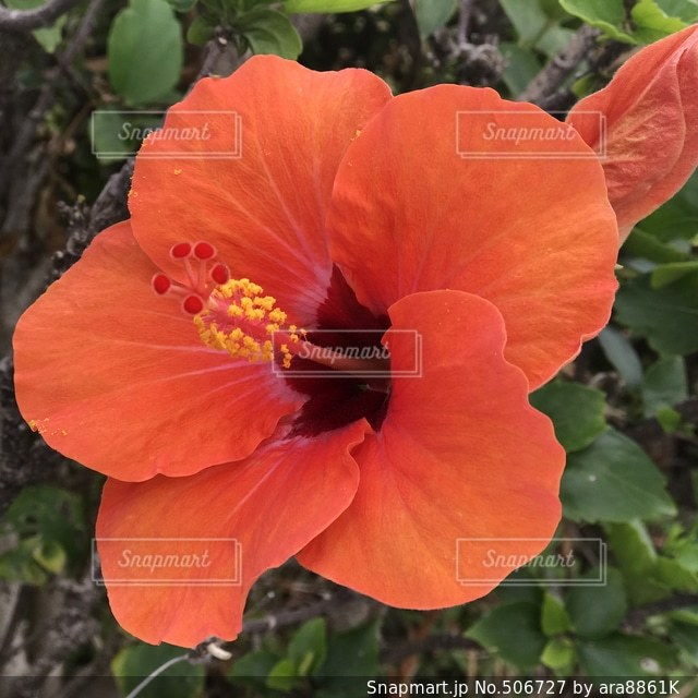 花の写真・画像素材[506727]