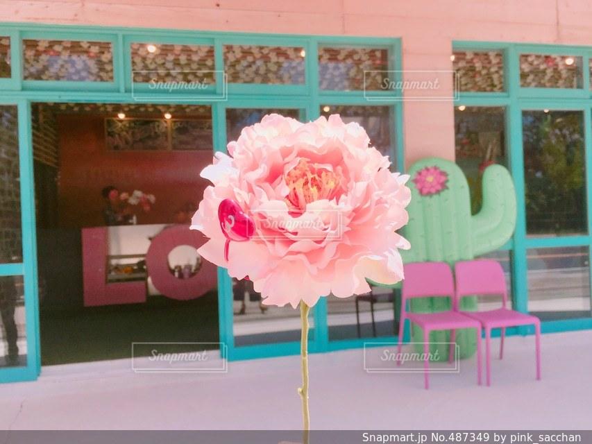 花の写真・画像素材[487349]