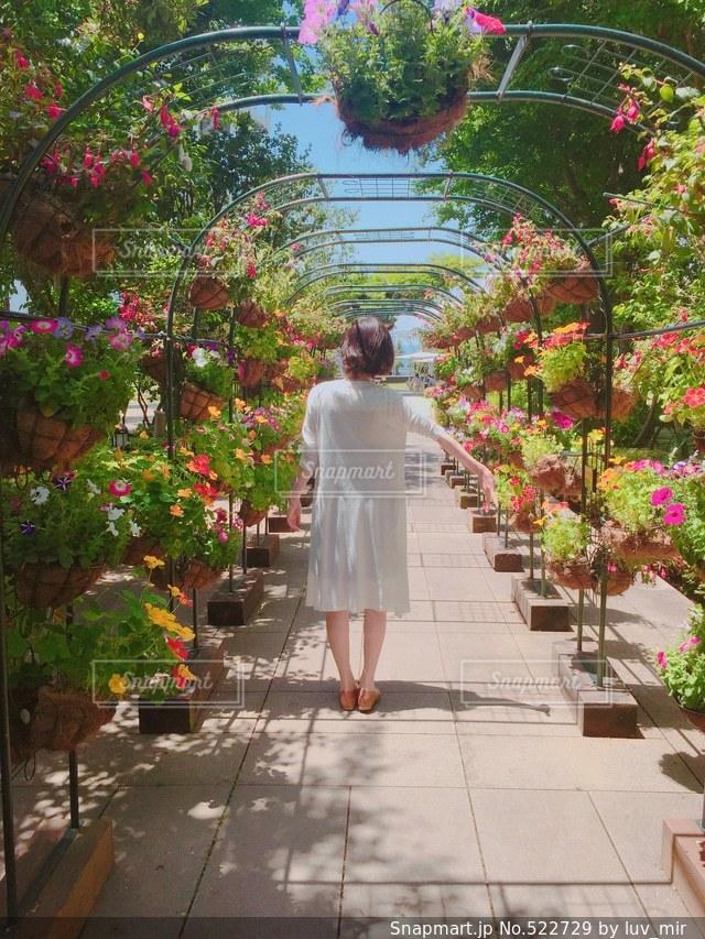 花の写真・画像素材[522729]