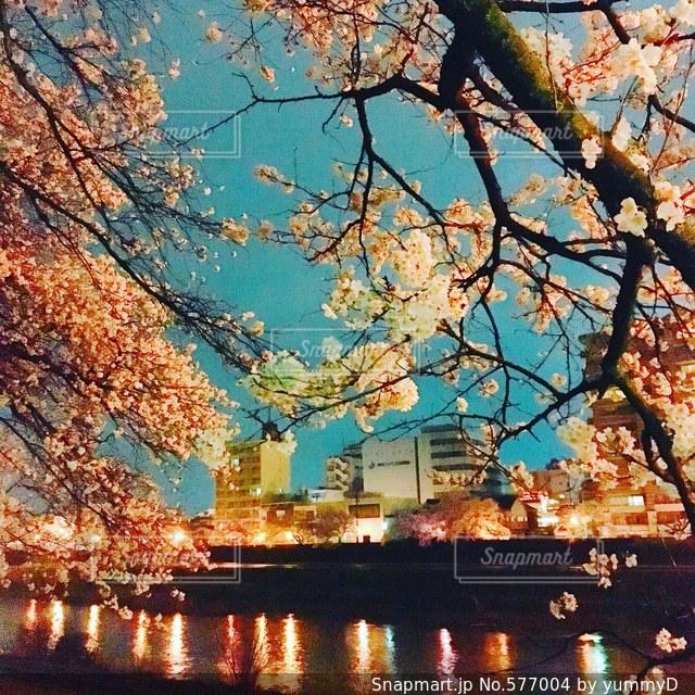 桜 - No.577004