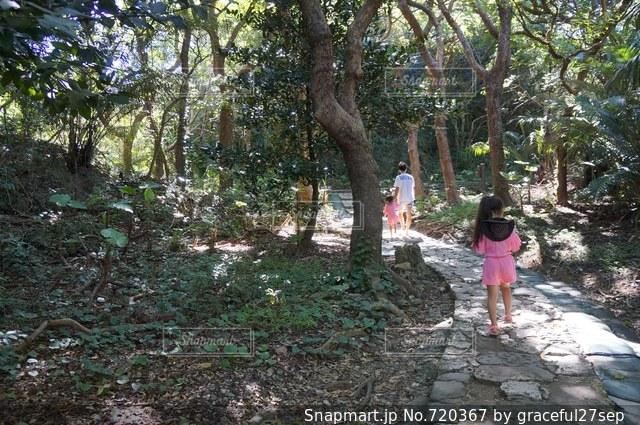木の隣に立っている人の写真・画像素材[720367]