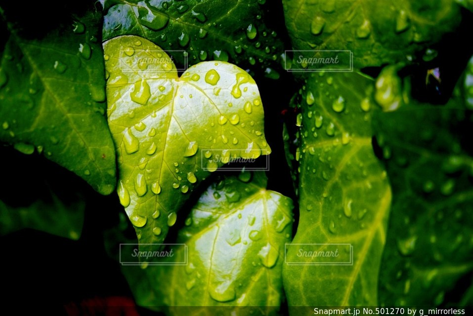 自然の写真・画像素材[501270]