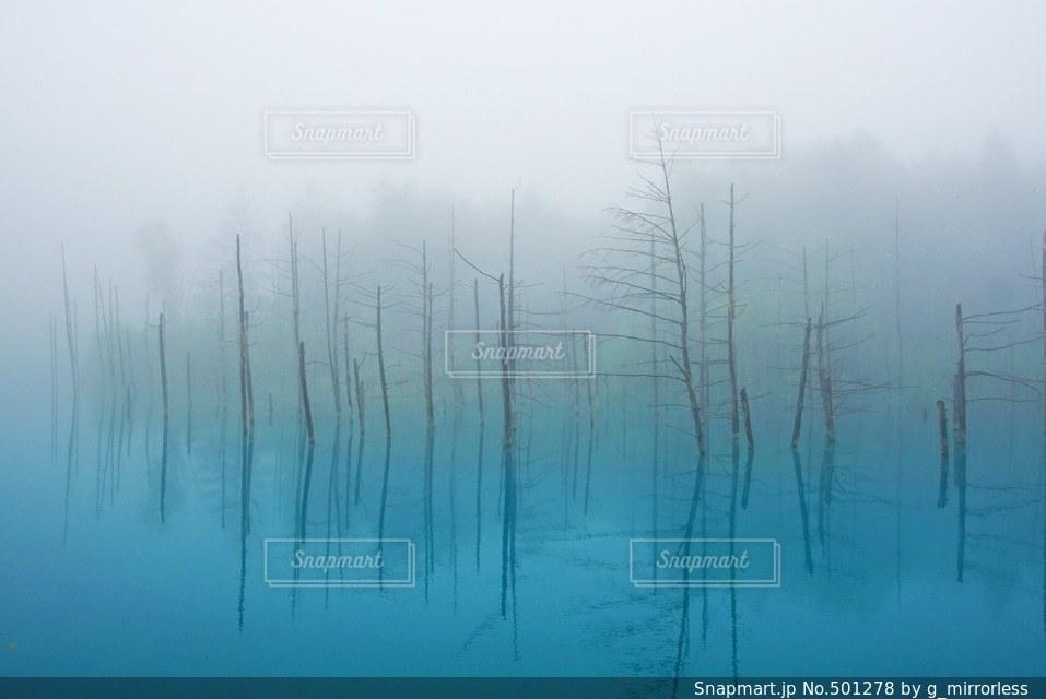 自然の写真・画像素材[501278]