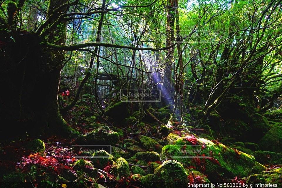自然の写真・画像素材[501306]