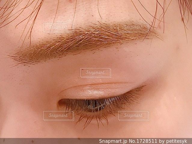 目と眉の写真・画像素材[1728511]