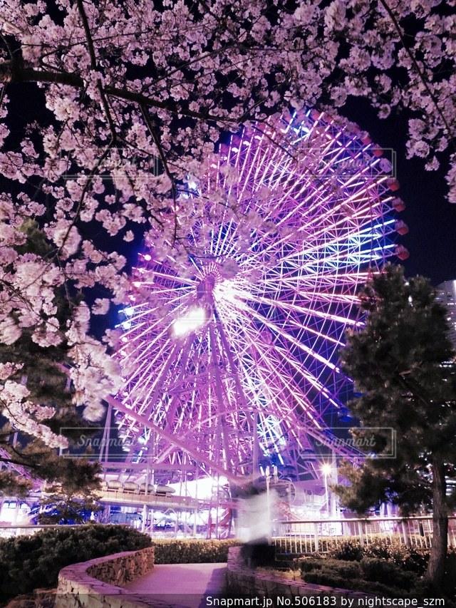 大輪の桜と観覧車の写真・画像素材[506183]