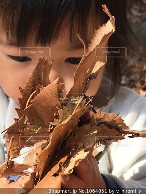 落ち葉の写真・画像素材[1064051]