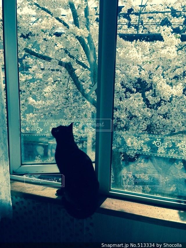 猫の写真・画像素材[513334]