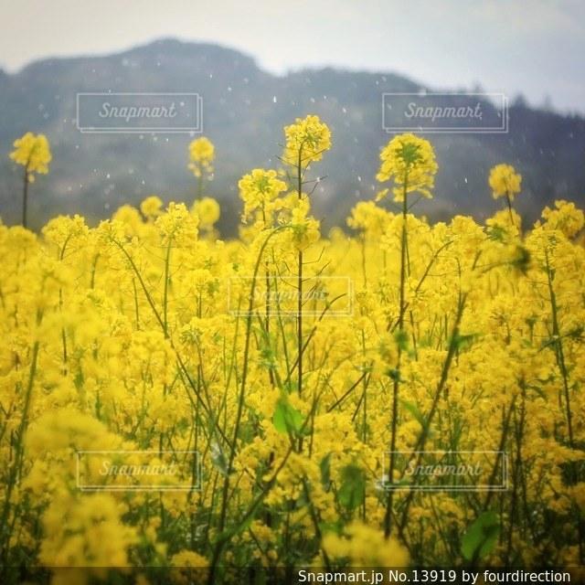 自然の写真・画像素材[13919]