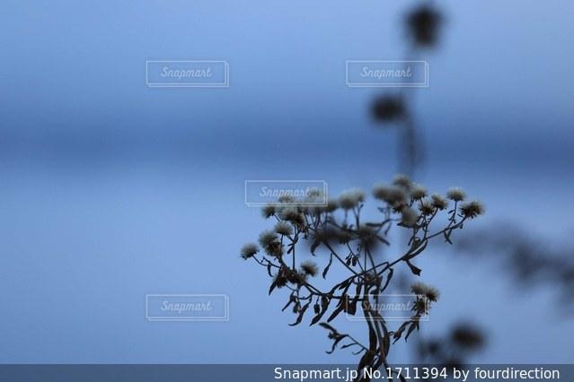 凍る朝の写真・画像素材[1711394]