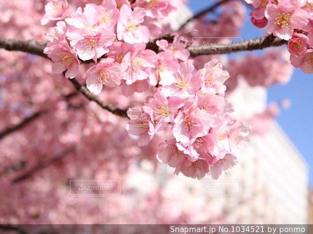 近くの花のアップの写真・画像素材[1034521]