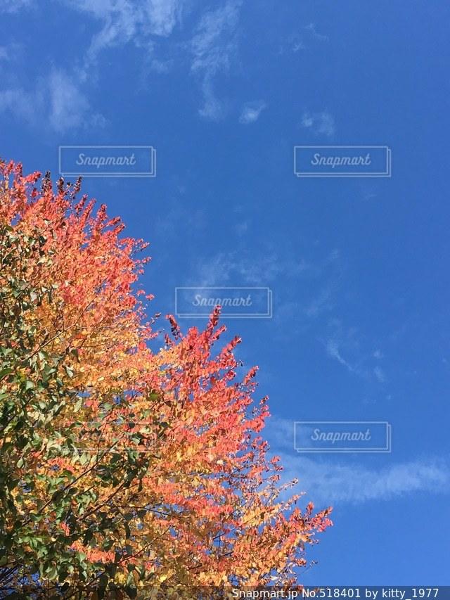 秋の写真・画像素材[518401]
