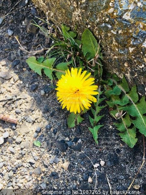 緑の葉と黄色の花の写真・画像素材[1087265]